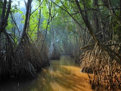 Rays of sun light through canopy of wild mangrove forest amazing tropical nature Stock Footage