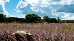 Time-lapse Moorland Hilversum Stock Footage