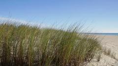 Dunes on the coast the Atlantic Ocean. Portugal Algarve Stock Footage