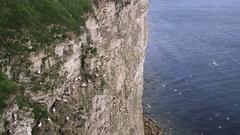 VIEW OF SEA BIRDS FROM CLIFFS RSPB BEMPTON CLIFFS Stock Footage