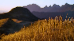 Yellow autumn grass swaying in the wind, Golden mountain hills on a sunset Stock Footage