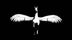 Pegasus. Animated silhouette. Alpha channel. Stock Footage