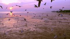 ฺฺBeautiful group of seagull flee cold weather to Thailand every year. Stock Footage