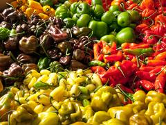 Harvest of Chilies Stock Photos
