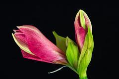 Sweet pink Stock Photos