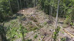 Flying through a clearing cut from the rainforest to plant subsistence crops Stock Footage