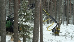 Video of a green forwarder working in the forest in winter Stock Footage