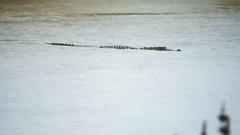 Mugger or Marsh Crocodile swimming in wild of Yala national park in Sri Lanka Stock Footage