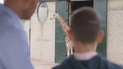 4K Young boy & his father looking at family of giraffes at wildlife park Stock Footage