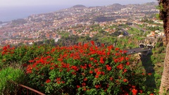 RED BOUGAINVILLEA PLANT CITY FUNCHAL MADEIRA Stock Footage