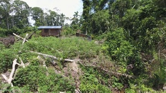 Aerial view of a colonist hut in a clearing cut out of tropical rainforest Stock Footage