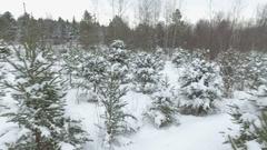 Pan of christmas tree farm Stock Footage
