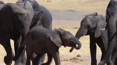Baby trots beside parents Stock Footage