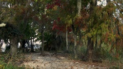 Cypress tress along the sandy shore of Lake Pontchartrain Stock Footage