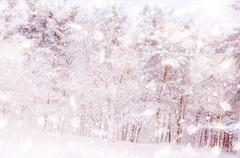 Winter snow magic forest background Stock Photos
