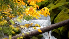 Autumn Colors Oregon Landscape Toketee Falls Douglas County Oregon Stock Footage