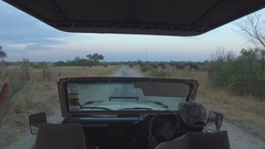 Game drive gets stopped by elephants Stock Footage
