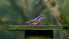 COAL TIT NUTHATCH FORGE VALLEY SCARBOROUGH Stock Footage