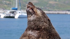 Seal catches fish from feeder Stock Footage