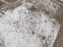 Aerial dolly shot of a large herd of elk grazing in a field Stock Footage