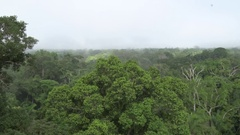 Mist rise over rainforest canopy in the morning Stock Footage