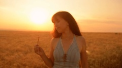 Gold rings on wheat ear of wheat in hands of girl romantic walk in the Stock Footage