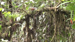 Epiphyte and moss grow on tree in Andean cloud forest Stock Footage