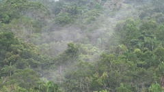 Mist rise over Amazon rainforest canopy in the morning Stock Footage