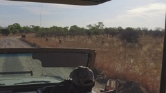 Game drive spots many Kudu Stock Footage
