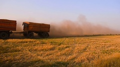 Truck with grain moving in the field, road in a wheat field, dust on the road Stock Footage