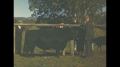 Vintage 16mm film, 1946 Australia Yeppon cattle farm, b-roll Stock Footage