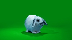 Funny white rabbit Stock Footage