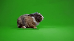 Funny gray rabbit Stock Footage
