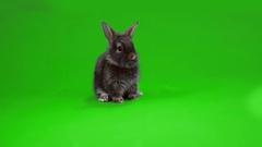 Black funny bunny Stock Footage