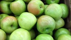 Camera trucks over vibrant green apples Stock Footage
