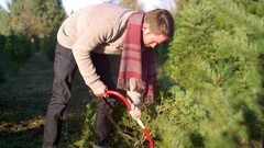 Young man sawing down a Christmas tree with a saw at a farm Stock Footage