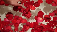 Hand girl holds the water with red rose petals Stock Footage