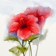 Watercolor painting red hibiscus flower Stock Illustration