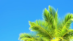 Green coconut palm tree leaves against vivid blue sky. Tropical island at summer Stock Footage