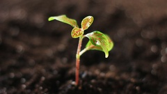 Watering young green plant on the soil. Stock Footage