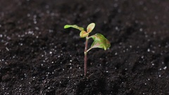 Watering young green plant on the soil Stock Footage