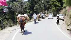 Horse carries heavy load in Himalaya mountain road, Dharamsala, India Stock Footage