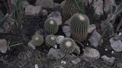 Tropical garden,cactuses and plants in Belgrade's botanical garden Stock Footage
