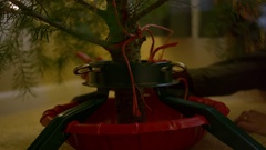 Young woman adjusting a Christmas tree stand Stock Footage