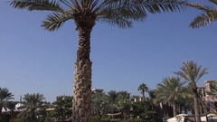 Dubai landscape exotic resort palm trees and powerful sun Arab world picture 4K Stock Footage
