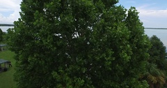 Fly-over Tree to Lake Stock Footage
