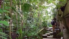 Couple walks across fish pond, tropical rainforest, Berlin botanical gardens Stock Footage