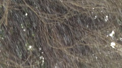 Light winter snow against forest background tight shot Olympic Peninsula Stock Footage