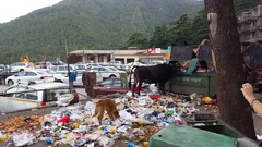 Cow dog and crows eat garbage waist from dumpster, Dharamsala, India Stock Footage