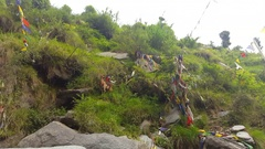 Brown goat eats shrubs, tibetan buddhist prayer flags, Himalayas, India Stock Footage